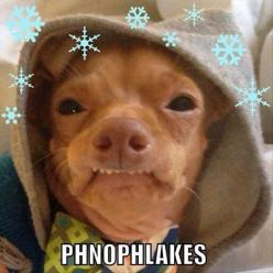 Why is this dog so funny?: Tuna, Giggle, Animals, Dogs, Phteven, Funny Stuff, Funnies, Humor