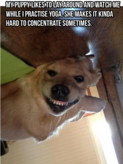 Will you stop that: Funny Animals, Funny Dogs, Funny Pictures, Funnies, Puppy, Yoga
