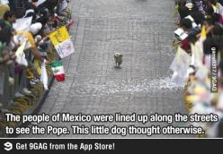 Wrong, they were definitely there to see the dog. Get your facts right.: Parade, Animals, Dogs, Funny, Thought, Puppy, Things, Photo, Pope