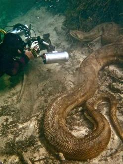 Yea, huge snake. However, let's take the time to think about how huge this dude's balls are. Holy crap: Water, Reptiles, Animals, Nature, Big Snake, Things, Snakes, Photo