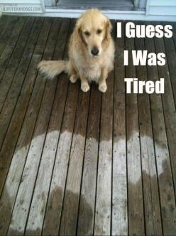 You've got to smile at this!: Doggie, Funny Animals, Golden Retrievers, Funny Pictures, So Funny, Rainy Days