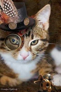 You are soooo cuuute lil' cat!! I want you! steampunk is hte best way for upcycling! #giftmeapp: Kitty Cat, Animals, Steampunk Cats, Stuff, Steampunk Kitty, Steam Punk, Steampunk Tendencies, Top Hats, Steampunk Hat