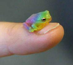 """Having a bad day? Have a tiny rainbow frog."": Rainbowfrog, Animals, Nature, Color, Rainbows, Frogs, Rainbow Frog"
