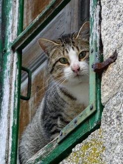 """""""If homeless cats could talk, they would probably say, give me shelter, food, companionship, and love, and I'll be yours for life."""" --Susan Easterly: Cats, Windows Cats, Adorable, Window Cats, Chat, Photo, Kitty, Baby Cats, Animal"""