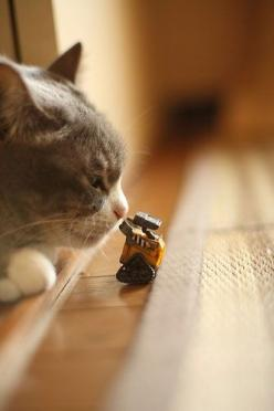 """ WUT iz it ? I don'ts like it; it must be destroyed."": Cats, Animals, Favorite Things, Walle, Pets, Funny, Photo, Wall E, Cat Lady"