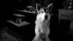 awwwwwwwwwwwww: Cute Animals Animals, Animal References, Pet S, Alluring Animals, Pet Animal Photography, Pets Group
