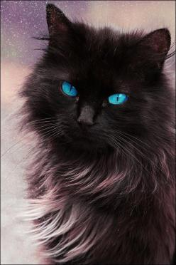Beautiful blue eyed cat...although I'm sure those eyes are edited!: Beautiful Cat, Animals, Kitten, Gorgeous Baby Blue, Black Cats, Pretty Cat, Blue Eyes, Gorgeous Blue, Kitty