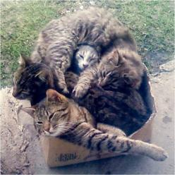 Box of cats: Cats, Fit, Animals, Funny Cat, Boxes, Crazy Cat, Funny Animal, Kitty, Cat Lady