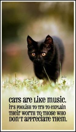 Cats are like music ... it's foolish to try to explain their worth to those who don't appreciate them. #catquotes: Cat Lady Quote, Kitty Cats, Kitten Quote, Black Cats, Crazy Cat, Cats Kittens, Animal