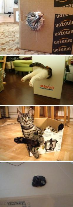 Cats In Boxes I always do this for my kitties when I buy something in a box….. makes for lots of laughs!!!: Cats In Boxes, Animals, Amazon Boxes, Boxes Click, Boxes Cats, Boxes Lollll, Boy Cats, Funny Cats Boxes Paw Playing