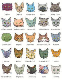 cats..: Kitty Cats, Animals, Cat Face, Art, Crazy Cat, Things, Cat Breeds, Cat Lady