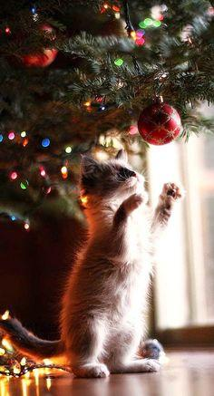 Christmas mischief.: Christmas Cats, Holiday, Animals, Posts, Kittens, Christmas Trees, Kitty, Merry Christmas