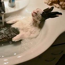 Cloody the bunny loves to take a bath the way your average human loves a pampered day at the spa: Bath Must, Bunny Bath, Rabbit Falls, Happy Bunny, Bathing Bunny, Hot Tubs, Happy Easter, Bunny Relaxing