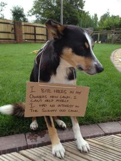 "dog-shaming.com So funny! Glad my blue heeler isn't the only ""dick dog"" that digs in the lawn!: Funny Animals, Dog Shame, Pet, Dogs Shaming, Things, Dog Shaming Funny, Dogs Funny"