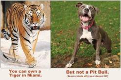 Dog specific legislation is wrong.  It's not the dogs it's the people.: Animals, Dogs, Stuff, Pets, Pibble, Pittie