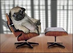 Dogs are awesome: Animals, Dogs, Stuff, Pets, Funny, Pugs, Puppy, Things