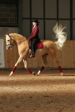 Dressage-I love the tail flip!-Does anyone know how to do dressage? COMMENT: Equine, Dressage Horses, Beautiful Horse, Palomino Dressage, Animal, Palomino S