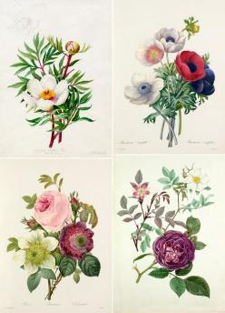 Floral illustrations { pattern inspiration }: Scientific Illustration, Tattoo Ideas, Floral Illustration, Botanical Illustrations, Botanical Tattoo, Botanical Floral, Watercolour Flower