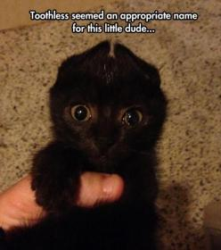 For More Videos visit and subscribe my #YouTubeChannel   https://www.youtube.com/user/TheCarcrashesvideos: Animals, Stuff, Funny Pictures, Black Cats, Dragon, Toothless, Things, Black Kittens