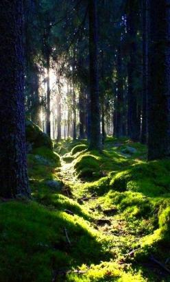Forest: Enchanted Forest, Lighted Path, Paths, Wood, Trees, Sunlit Path, Beautiful Nature