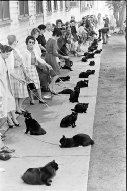 From LIFE, a long line of women auditioning their black cats for a role in Hollywood. How cool :): Hollywood Auditions, Animals, Cat Audition, Black Cats, Crazy Cat, Blackcats, Photography, Cat Lady