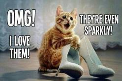 Funny animals, funny pics, hilariousness, funny jokes, jokes funny, humor cats, hilarious cats …For the funniest quotes and hilarious pictures visit www.bestfunnyjoke...: Cats, Shoes, Animals, Funny Stuff, Funnies, Funny Animal, Kitty