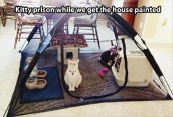 Funny Pictures Of The Day – 88 Pics: Cats, Good Ideas, Animals, Kitty Prison, Pet, Funny, Crazy Cat, House, Cat Lady