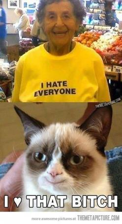 GC: Cats, Hate Everyone, Grumpycat, Funny Stuff, Funnies, Humor, Grumpy Cat, Animal