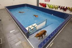 how cool! if i ever have a boatload of money to invest in a pool, i'll have someone make cotton one of these, haha.: Dog Hotel Ideas, Indoor Dog Park Ideas, Google Search, Dog Daycare Ideas, Doggy Daycare Ideas, Doggie Daycare Ideas, Dog Pools