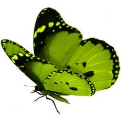 I ❤ butterflies . . . Green flutterby: Beautiful Butterflies, Color Green, Animals, Favorite Color, Flutterby