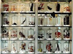 I have always wanted to display nature things this way, and cycle them through: Bell Jars, Idea, Belljars, Under Glass, Cabinet Of Curiosities, Collection Displays, Nature Things
