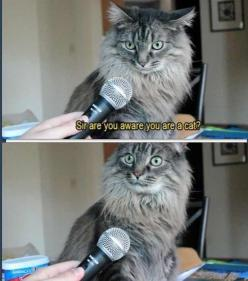 I laughed too hard at this: Animals, Funny Cats, Funny Stuff, Humor, Funnies, Funny Animal
