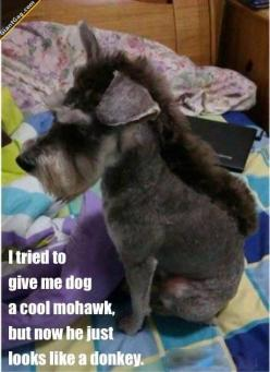I Tried To Give My Dog A Cool Mohawk | Click the link to view full image and description : ): Animals, Donkey Dog, Dogs, Donkeys, Funny Stuff, Funnies, Haircut