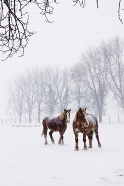 Julie Carrow. Gorgeous!: Beautiful Horses, Gentle Giant, Winter Scene, Horses In Snow, Horses In Winter, Winter Horse, Horses Winter, Animals Horses, Christmas Horse Photography