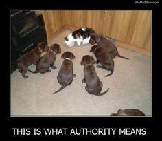 Killer Kitties Approved (Canine Death Squad says no fair): Cats, Funny Animals, Dogs, Funny Cat, Pet, Humor, Puppy, Funnies