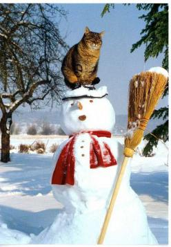 Kitty on the snowman...cats are so irreverent! : Cats, Animals, Kitty Cat, Funny Cat, Winter Wonderland, Christmas, Snow Cat, Snowman, Has