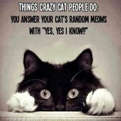 LOL not very crazy about cats but i do talk to the ones i have when they do this LOL!!!: Cat People, Crazy Cats, Animals, Crazycat, Catlady, Funny, So True, Kitty, Cat Lady