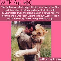 Man and Lion best friends - WTF fun facts