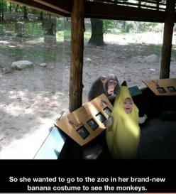 OMG I can't...stop...laughing... I'm also playing the pinterest drinking game so I may be over exaggerating.: Giggle, The Zoo, Bananas, Funny Stuff, Funnies, Monkey, Kid