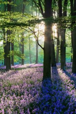 Once upon a time, in a land not far from our own, there lived among the amid the dappled sunlight and petal strewn forest floor...: Enchanted Forest, Forests, Spring Time, Nature, Pictures, Garden, Photography