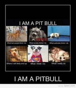 """Pit Bulls...the """"where I'll end up"""" makes me so sad and at the same time the """"what I think I do"""" cracks me up and the """"what I actually do"""" is oh so true...LOVE my pit bull!!: Animals, Dogs, Pits, Truth, Pets, So True, Pittie"""