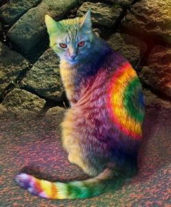 Rainbow Cat: Cats, Tie Dye, Animals, Quotes, Color, Rainbows, Kitty