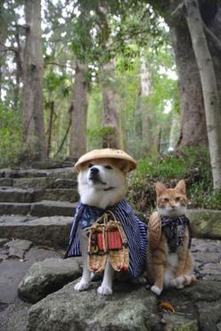 Shiba Inu and cat. Such friend. Much cute.: Animals, Shiba Inu, Friends, Dogs And Cats, Pet, Funny Animal, Photo, Shibainu
