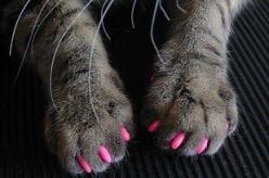 Soft Paws are a safe alternative to declawing. | 23 Insanely Clever Products Every Cat Owner Will Want: Cats, Animals, Pets, Nail Cap, Pink, Cat Nails, Kitty