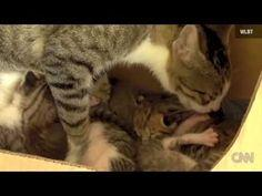 SQUIRREL ADOPTED BY CAT LEARNS TO PURR!!