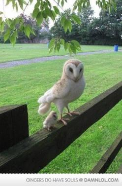 that is the most adorable thing in the world!: Babies, Animals, Mother, Baby Owls, Mini Me, Birds, Babyowl, Barn Owls