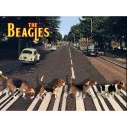 The Beagles ;-): Animals, Dogs, Stuff, Pets, Beagles, Funny, Abbey Road
