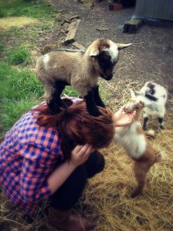 The Terrible Truth About Adorable Baby Goats  OH... I was laughing so hard by the end of this!: Babies, Animals, Stuff, Pet, Pygmy Goat, Babygoats, Funny Animal, Baby Goats