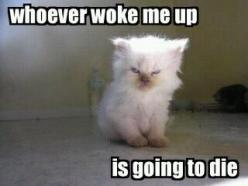 This is me on the few days I get to sleep in! Haha: Cats, Animals, Quote, Funny Stuff, Funnies, Things, Mornings, Kitty