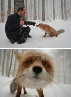 This is soo cute!: Picture, Animals, Stuff, Nature, Pet, Foxes, Photography